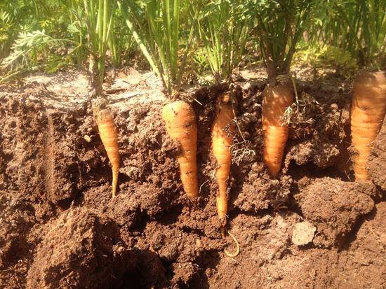 Living soils foster healthy farms growing florida for What does soil contain